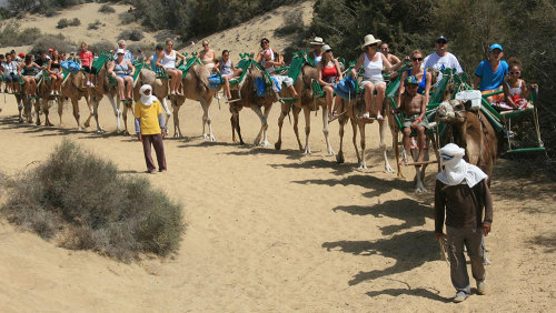 Attractions Gran Canaria Camel Safari Maspalomas